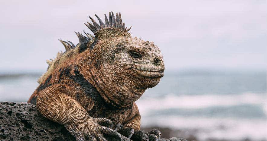Blog Thumbnail - Galapagos 3