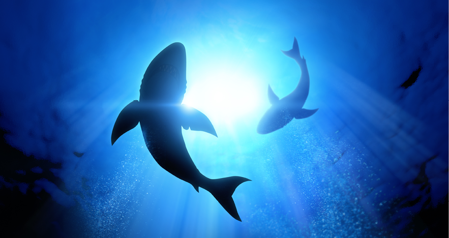 Blog Thumbnail - Shark Tracker App