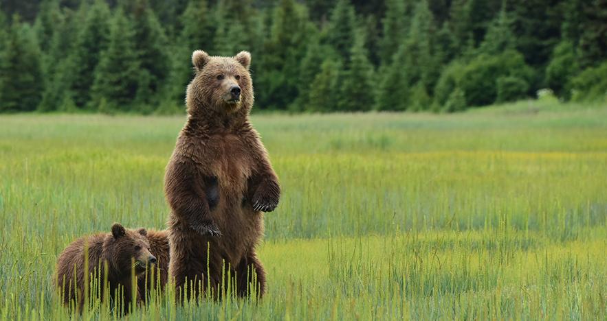 bear alaska trip
